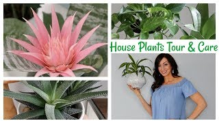 House Plants Tour & House Plant Care Tips | Best House Plants for Beginners