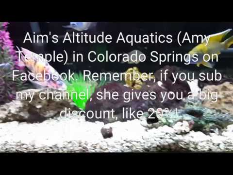 African Cichlids: Healthy Tank Balance Tips and New Fish Stock Update