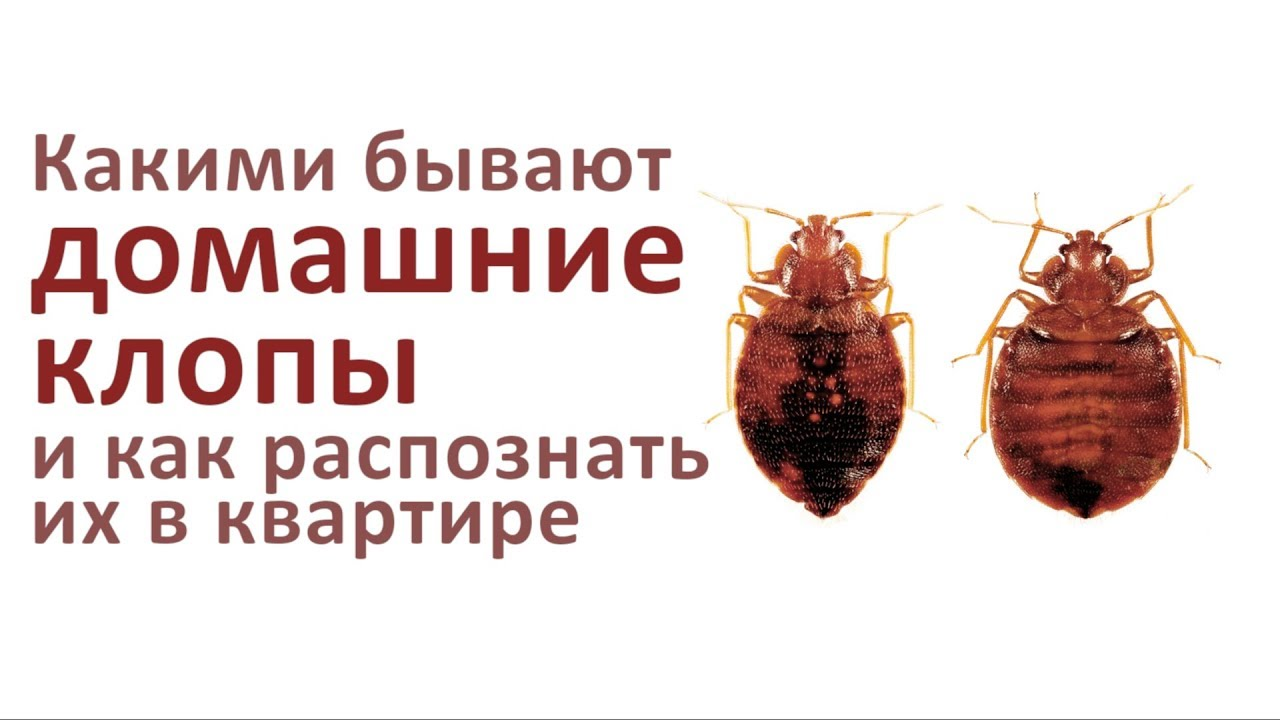избавиться от постельных паразитов