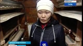видео Мини-птицеферма на своем участке