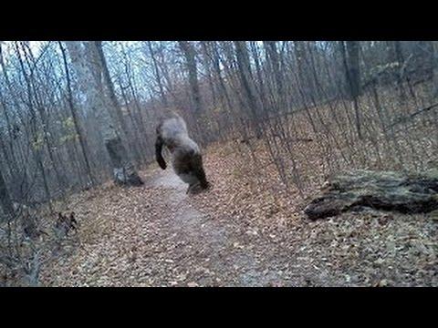 Explained Hidden Trail Cam Photos