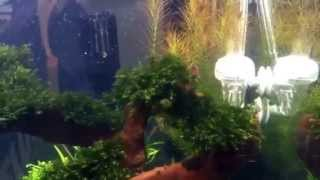 Aquariums West Tropica Plant Growth System Nano