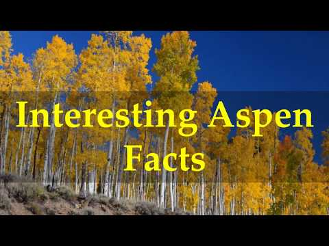 Interesting Aspen Facts