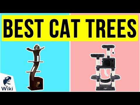 10 Best Cat Trees 2020