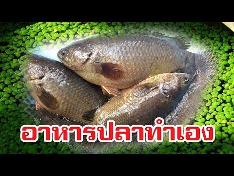 อาหารปลาจากธรรมชาติ ง่ายมาก!!!!