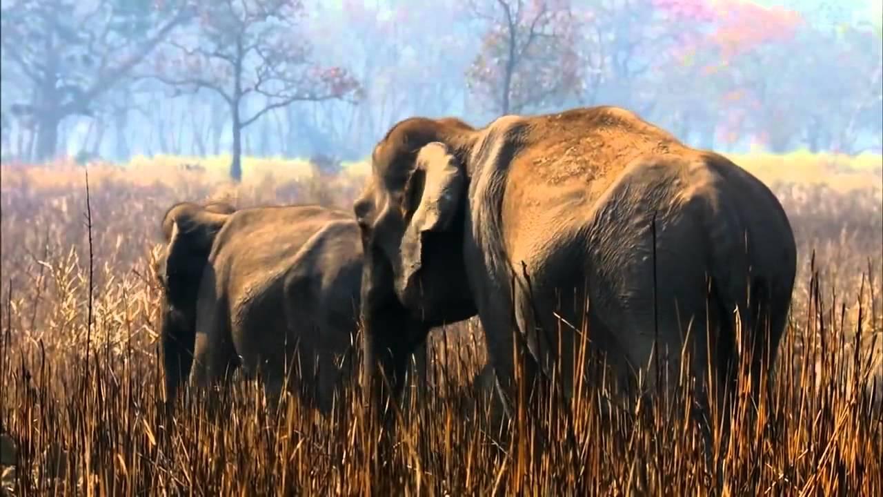 В царстве слонов  Тайны дикой природы Индии