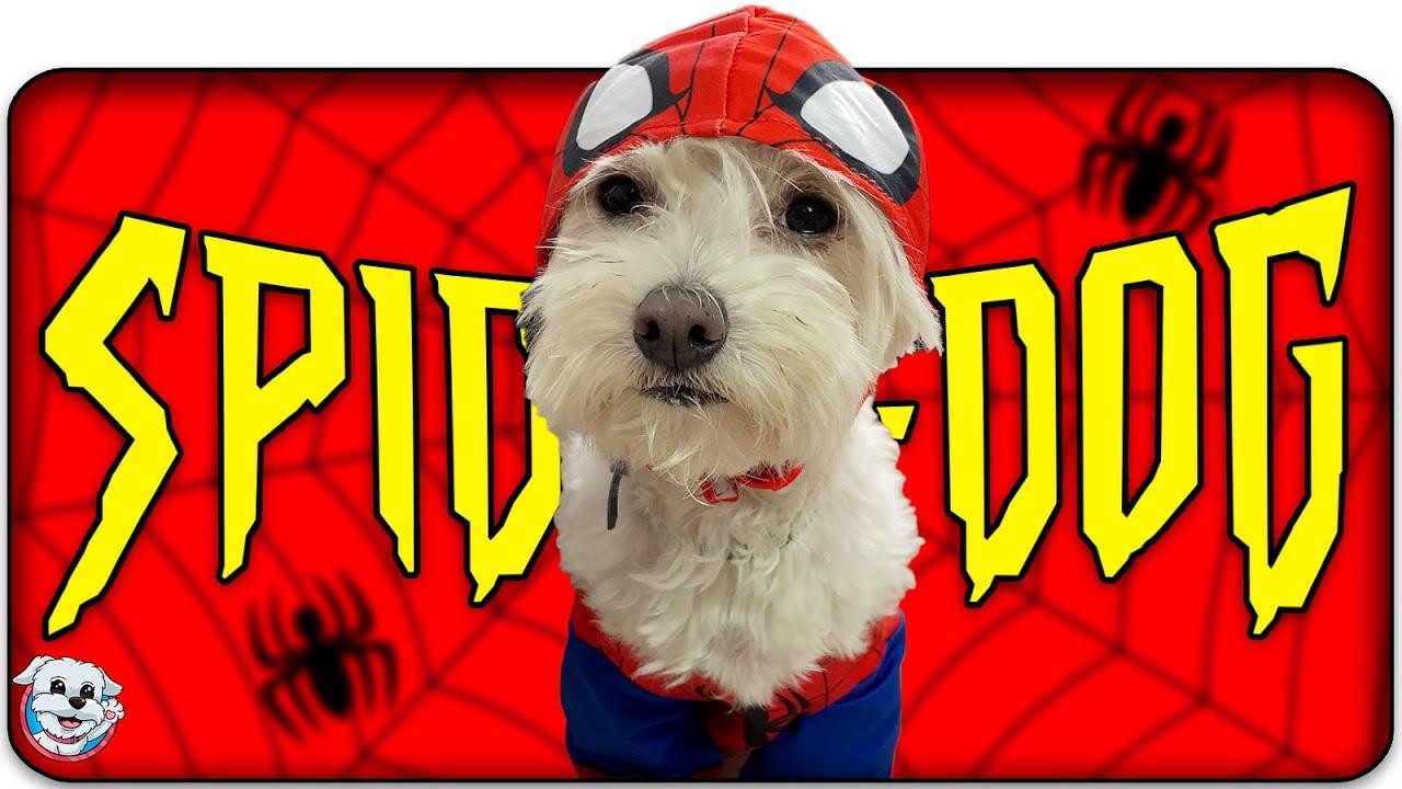 ¡A mi PERRO le PICA una ARAÑA! SPIDERDOG 🐶🕷 Anima Dogs