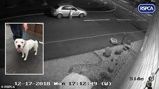 Footage shows a dog abandoned and trying to jump back in car