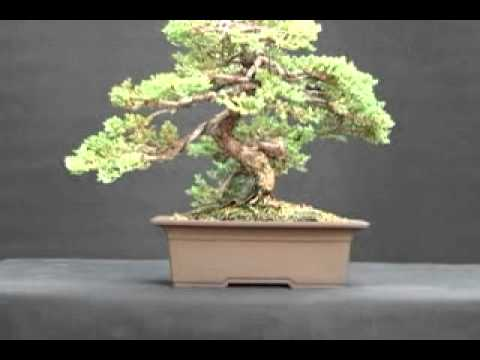 Bon Dallas Bonsai   Choosing A Bonsai Pot. Dallas Bonsai Garden