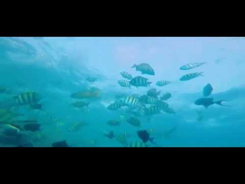 Saudia dive Red Sea