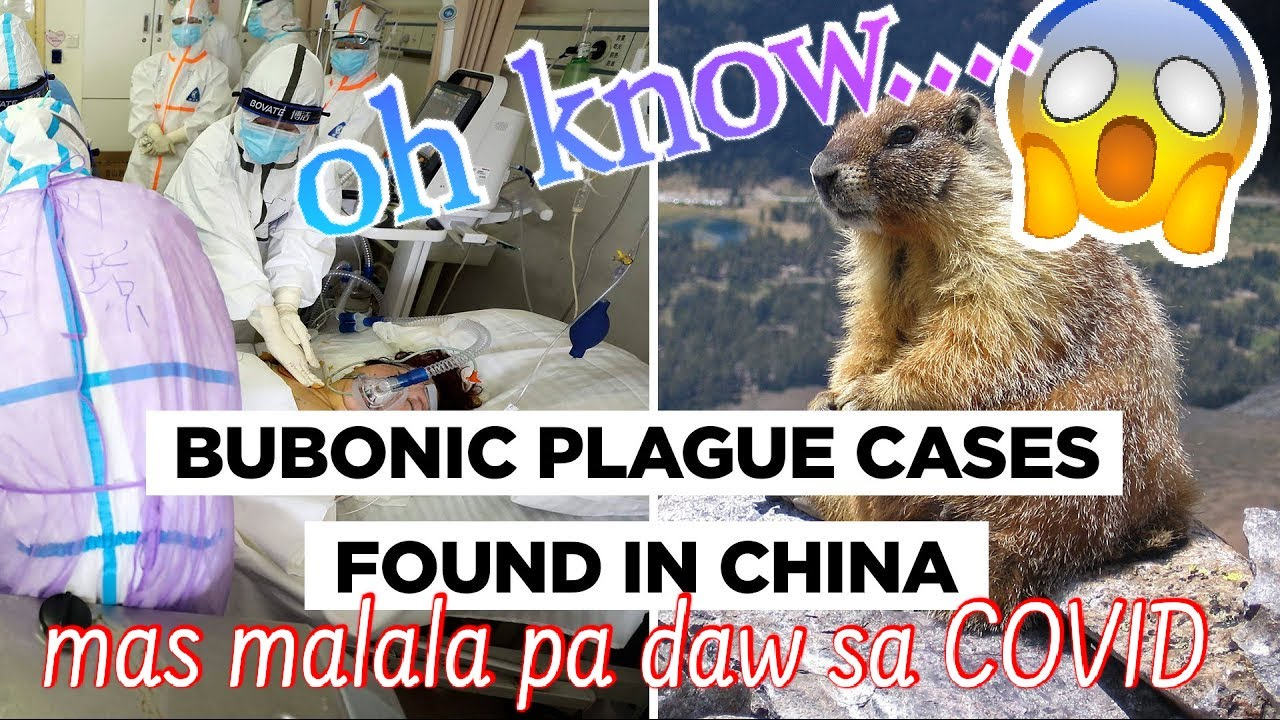 BUBONIC plague outbreak | mas malala pa daw sa covid ...