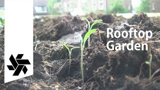 How To Make A Rooftop Garden // For A Tiny House
