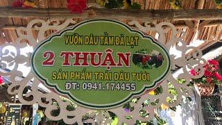 Tham Quan Vườn Dâu 2 Thuận Xã Mỹ Khánh, Long Xuyên, An Giang