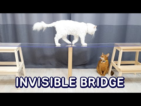 Cats vs Invisible Bridge