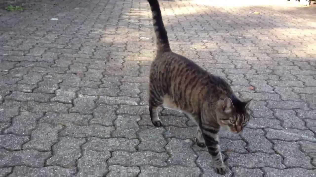 Chat rencontre avec algeriens