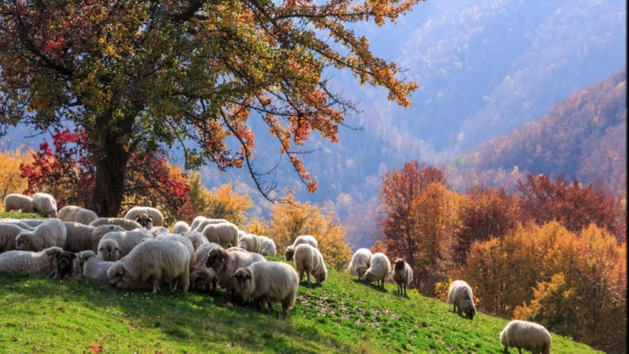 Карпаты осенью