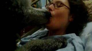 Repeat youtube video Lickey poodle
