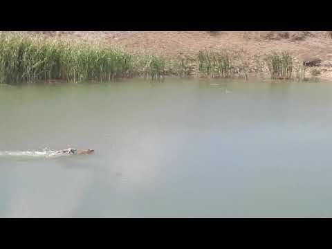 Охота воде тазы