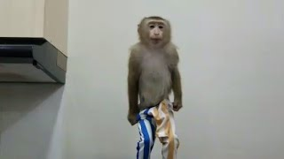 Monkey Baby Nui Nui knows to undress herself