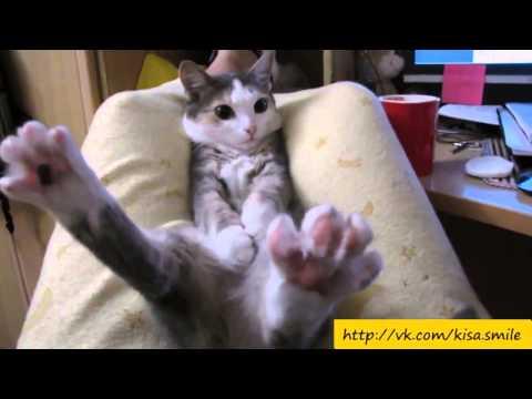 Прикольные фото и видео с кошками кот прикол, приколы кошки смотреть бесплатно онлайн