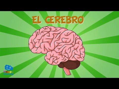 EL CEREBRO | Vídeos Educativos para Niños
