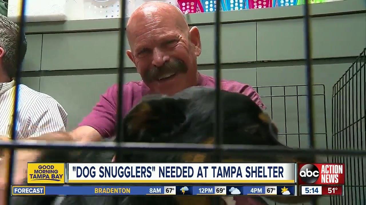 Dream Job Alert: Professional Dog Cuddlers Needed In Florida