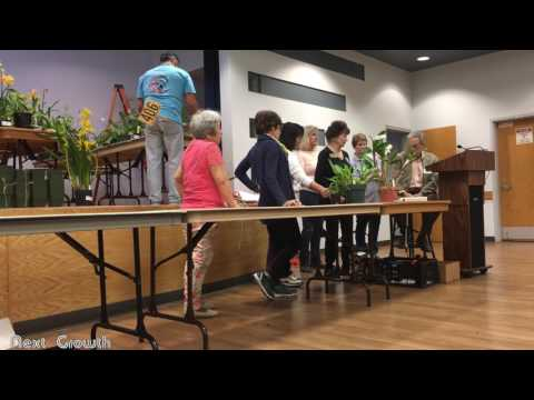 Auction of orchids by Newport Harbor Orchid Society. Part 1