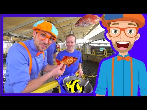 Learn About Fish for Children with Blippi | Educational Vide