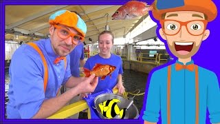Learn About Fish for Children with Blippi | Educational Videos for Kids thumbnail