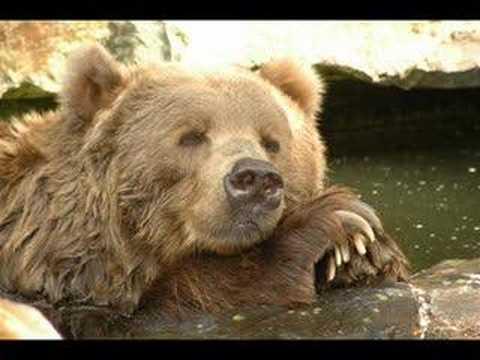 Super Furry Animals - The International Language Of Screaming