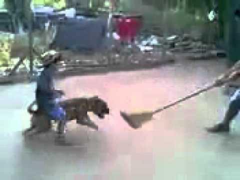 domando perro salvaje
