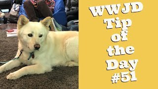 What Would Jeff Do? Dog Training Tip of the Day #51