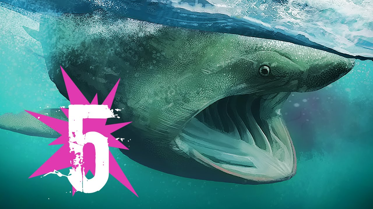 Top Biggest Sharks In The World Largest Sharks In The - 5 largest ocean in the world