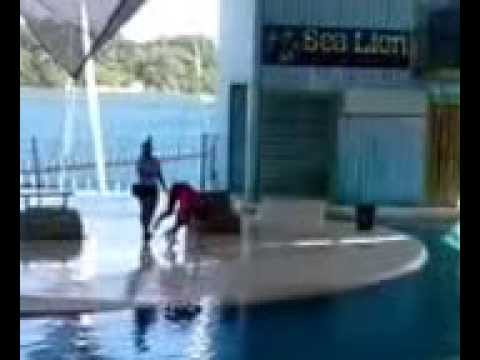 sealion show @ ocean adventure subic bay