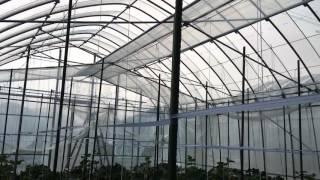 強風が吹いたので動画撮影してみました。 鳥取県推薦の低コストビニール...