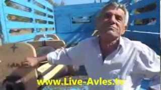 www.Live-Avles.tv * Σαμάρια!