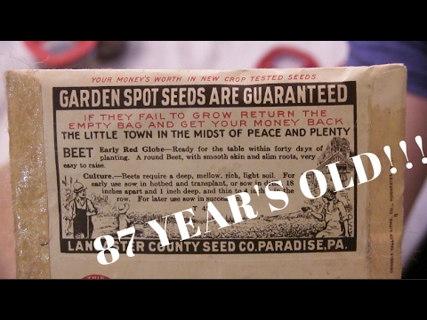 SPROUTING 87 YEAR OLD VEGETABLE SEEDS - Resurrecting Lost Ge