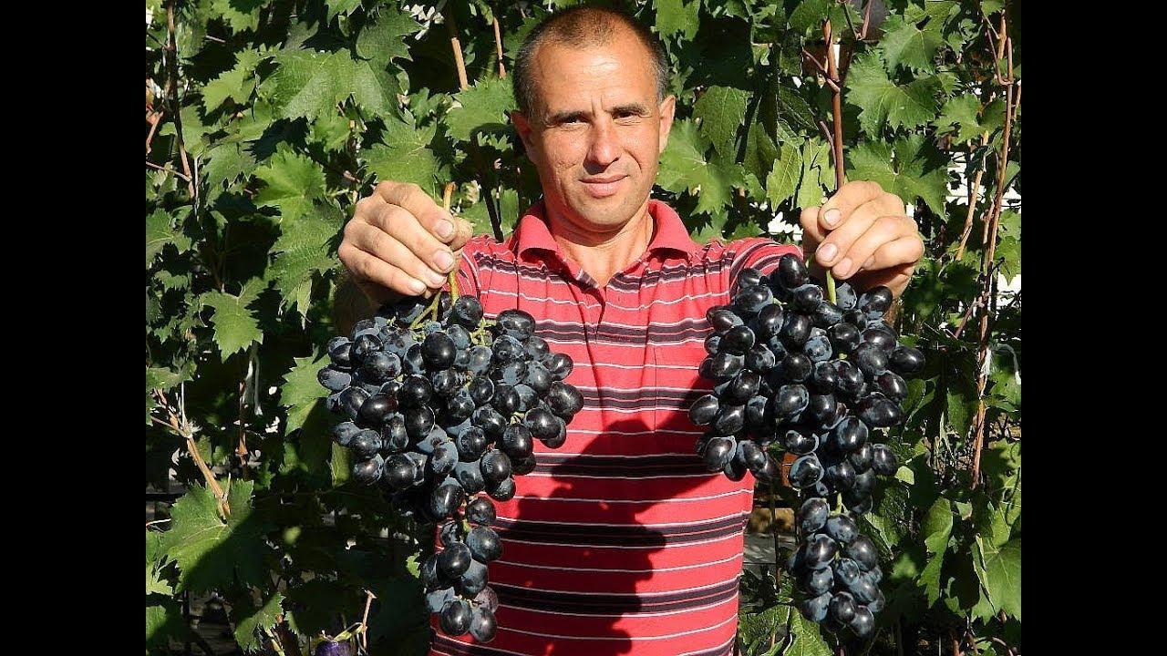 Знакомсва Виноградо