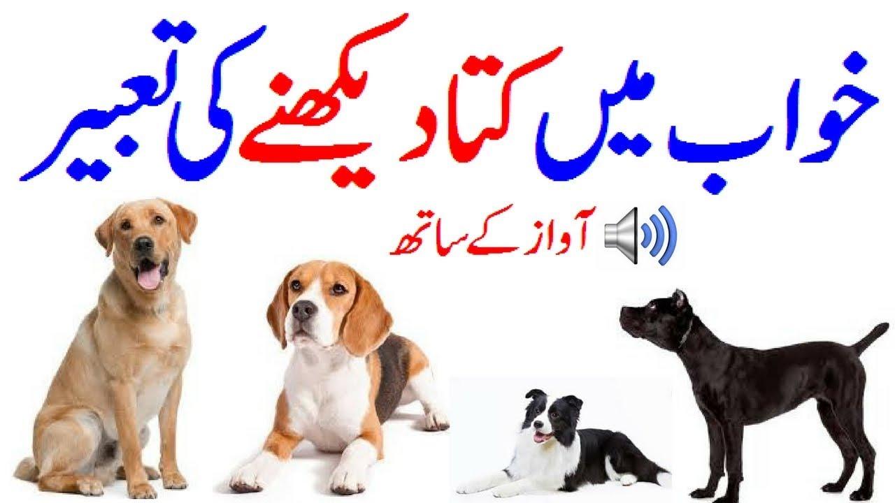Khawab Ki Tabeer In Urdu Khawab Mein Kutta Dekhna Khawab Mein Kutta Dekhne  Ki Tabeer