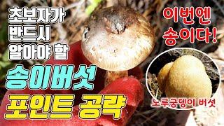 송이버섯 산행 - 초보자가 반드시 알아야 할 송이버섯 …