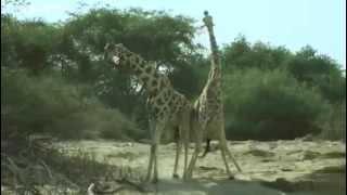 Смешное видео говорящие животные