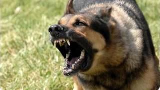 «Набросились и загрызли» В Москве собаки растерзали вдову известного актера