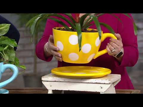 Plow Hearth Oversized Teacup Planter With Saucer On Qvc Youtube