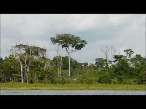 World Sounds Project - Congo - 1 : Koutou Jungle