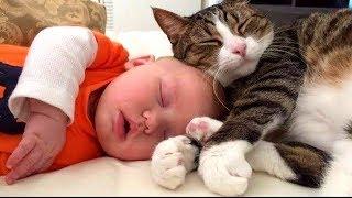 Gatos Protegiendo Bebés.😺👶 Los Gatos Aman a los Bebés