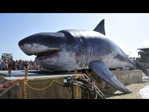 Megalodon Monster Shark - Megalodon Trivia Quiz - YouTube