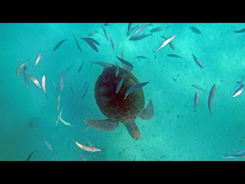 Barbados - Snorkeling (Royal Princess Excursion)