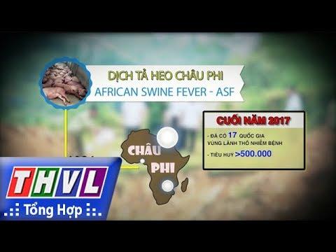 THVL | Dịch tả heo châu Phi nguy hiểm thế nào?