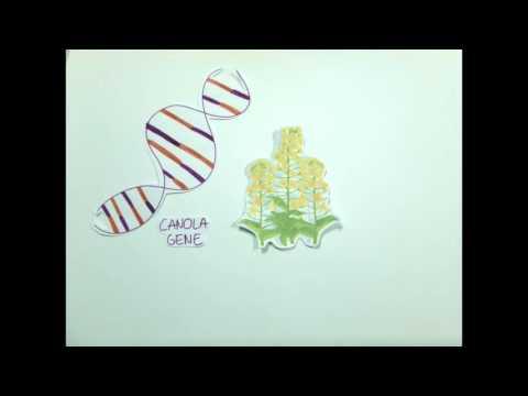 GMO final
