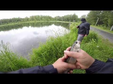 Taku Campbell Lake Fishing